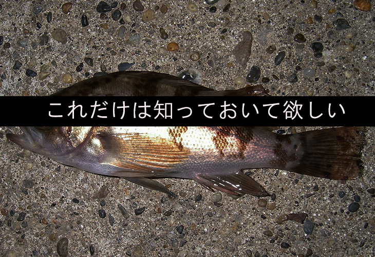 【超初心者向け】 釣りの魅力って?釣りを始める前に読んで欲しいこと