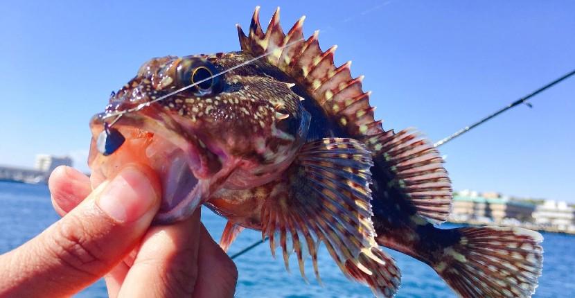 【海ルアー釣り編】初心者でも簡単に狙えるオススメの魚6選