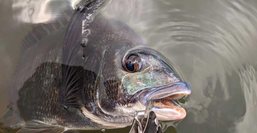 【釣りの始め方】まずは『釣る魚=ターゲット』を決めよう!