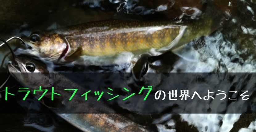 【トラウトフィッシングの世界へようこそ】管釣り&自然渓流別の魅力を語りたい